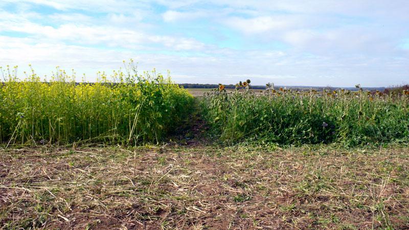 Le bon couvert et le mauvais couvert a2c le site de l 39 agriculture de conservation - Chambre d agriculture haute saone ...