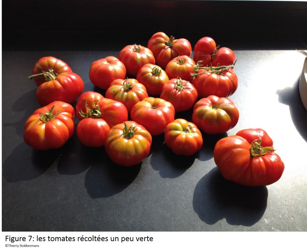 reste sauce tomate