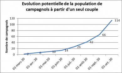 Evolution potentielle de la population de campagnols à partir d'un seul couple
