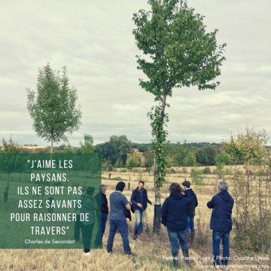 Agroforesterie chez Pierre Pujos, Gers