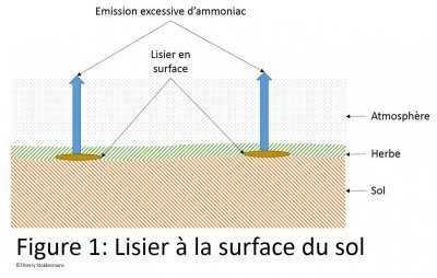 Lisier à la surface du sol